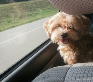 We try to take road trips to take our baby